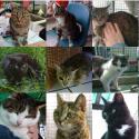 Emergenza sanitaria: aiutiamo il gattile di Bagno a Ripoli